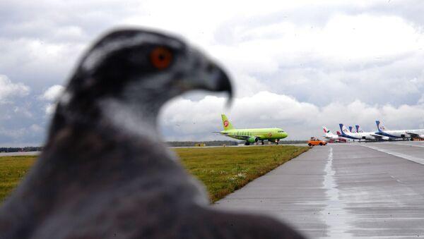 Dịch vụ chim sân bay Domodedovo - Sputnik Việt Nam