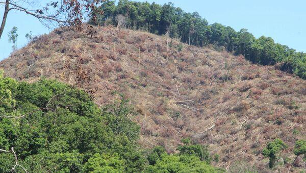 Rừng tự nhiên tại xã An Hưng, huyện An Lão (tỉnh Bình Định) bị chặt phá - Sputnik Việt Nam
