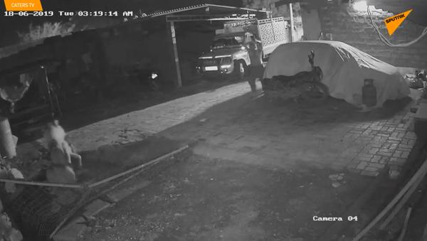 Võ tòng đánh hổ: Bác nông dân khiến sư tử kinh hồn khiếp vía - Sputnik Việt Nam