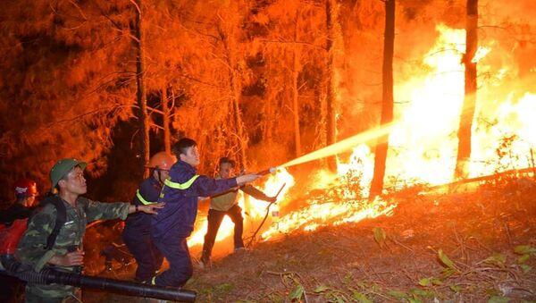 Cháy rừng xảy ra trong đêm ở Hà Tĩnh - Sputnik Việt Nam