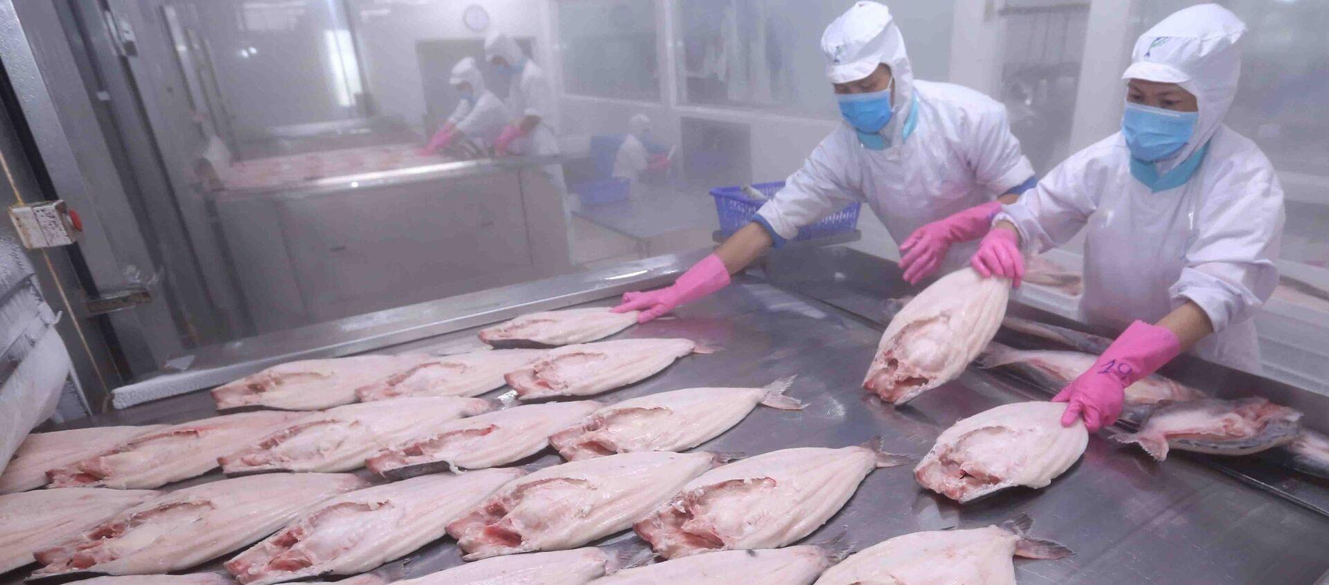 Thị trường EU hiện đang là thị trường xuất khẩu thủy sản đứng thứ hai của Việt Nam, chiếm trọng 17% tổng giá trị xuất khẩu thủy sản.  - Sputnik Việt Nam, 1920, 06.07.2019