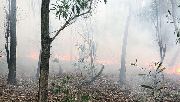 Cánh rừng trồng nguyên liệu đang bị cháy.  - Sputnik Việt Nam