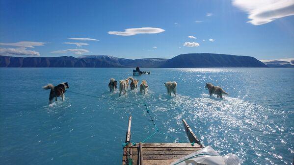 Những con chó kéo xe trượt trên mặt băng phủ đầy nước ở Greenland - Sputnik Việt Nam