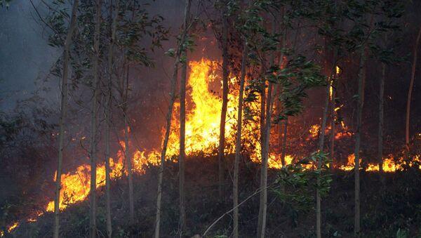 Lửa đang cháy ở rừng keo tràm ở phường Hương Hồ, thị xã Hương Trà.  - Sputnik Việt Nam
