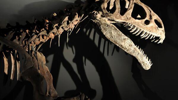 Bộ xương khủng long - Sputnik Việt Nam