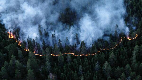 Rừng Siberia chìm trong biển lửa  - Sputnik Việt Nam
