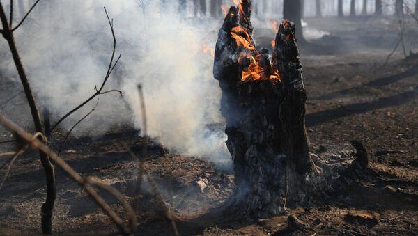 Cháy lớn ở rừng Siberia - Sputnik Việt Nam