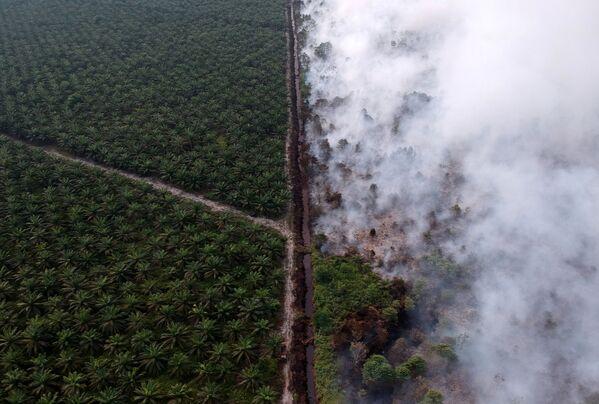 Quang cảnh đám cháy rừng ở Indonesia nhìn từ trên cao - Sputnik Việt Nam