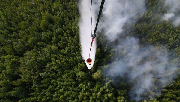 Cháy rừng ở Siberia - Sputnik Việt Nam