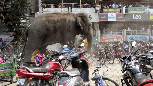 Mọi người đang trốn khỏi một con voi, đang đi dọc theo đường phố tại Siliguri (Ấn Độ) - Sputnik Việt Nam