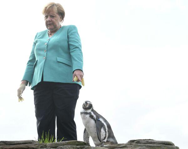 Thủ tướng Đức Angela Merkel cho chim cánh cụt ăn ở Stralsund, miền Bắc nước Đức - Sputnik Việt Nam