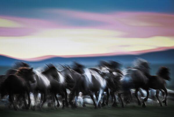 Ngựa ở Mông Cổ - Sputnik Việt Nam