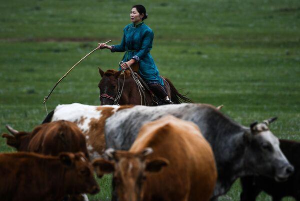 Người phụ nữ chăn cừu Mông Cổ - Sputnik Việt Nam
