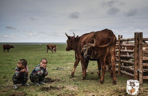 Các cậu bé xem bò chăn thả trên cánh đồng ở huyện Omnodelger, tỉnh Khentii, Mông Cổ - Sputnik Việt Nam