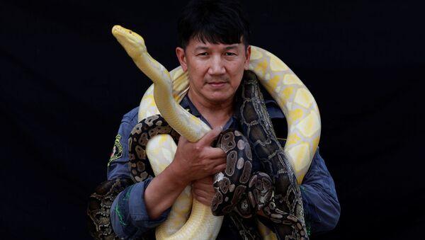 Lính cứu hỏa Pinyo Pukpinyo, được biết đến là người chuyên bắt rắn tạo dáng với con trăn bắt được ở Bangkok trước ống kính của nhiếp ảnh gia - Sputnik Việt Nam