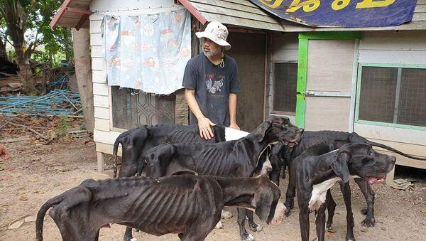 Quốc vương Thái Lan bảo trợ 13 con chó gần chết đói - Sputnik Việt Nam