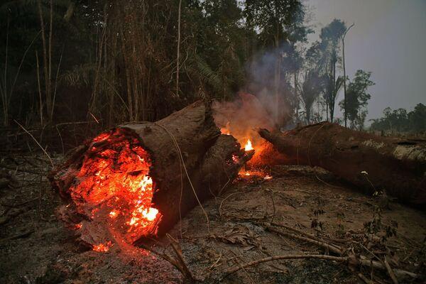 Thân cây cháy trong rừng nhiệt đới Amazon - Sputnik Việt Nam