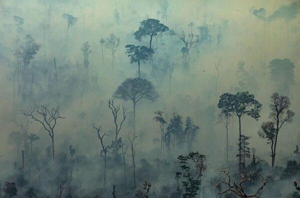 Quang cảnh đám cháy trong rừng Amazon, Brazil - Sputnik Việt Nam
