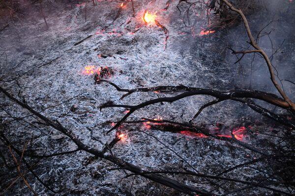 Cành cây trong đám cháy rừng Amazon - Sputnik Việt Nam