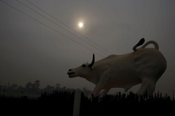 Tượng con bò qua màn khói cháy rừng Amazon - Sputnik Việt Nam