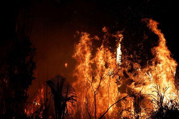 Đám cháy rừng ở Amazon, Brazil - Sputnik Việt Nam