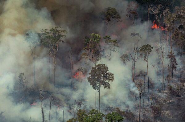Cháy rừng ở Brazil - Sputnik Việt Nam