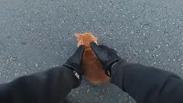Cứu chú mèo từ dưới bánh xe máy - Sputnik Việt Nam