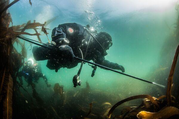 Một thợ lặn thám hiểm khám phá đáy vịnh Novokuril, biển Okshotsk gần đảo Urup - hòn đảo thuộc nhóm đảo phía nam quần đảo Kuril - Sputnik Việt Nam