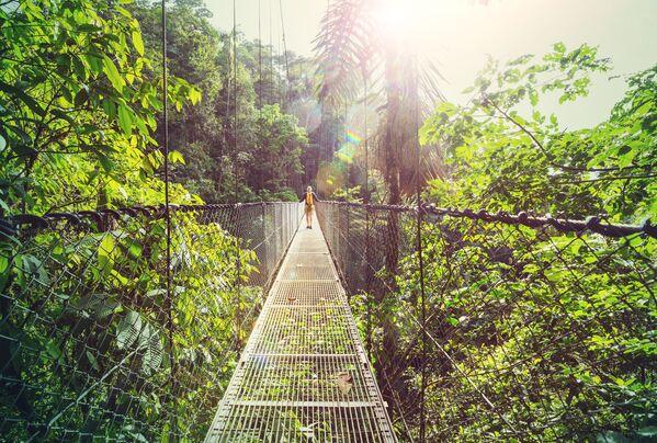 Đi bộ trong rừng rậm Costa Rica ở Trung Mỹ - Sputnik Việt Nam