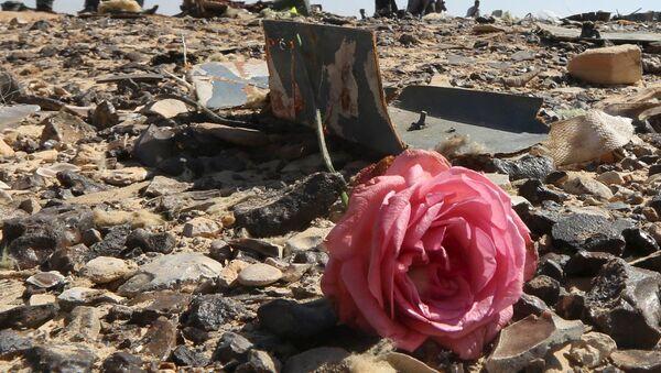 Hoa hồng tại nơi máy bay Airbus A321 rơi ở Ai Cập. - Sputnik Việt Nam