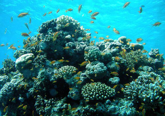 Cồn san hô