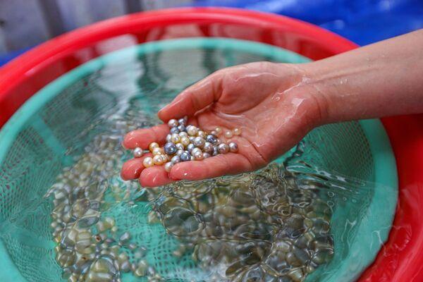 Trại nuôi ngọc trai trên đảo Phú Quốc, Việt Nam - Sputnik Việt Nam