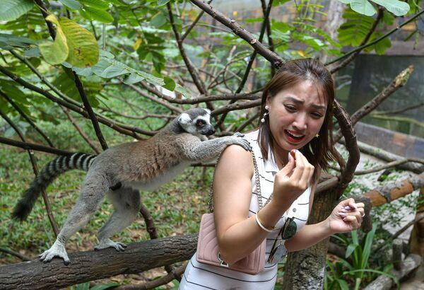 Vượn cáo tại công viên VinPearl Safari trên đảo Phú Quốc, Việt Nam - Sputnik Việt Nam