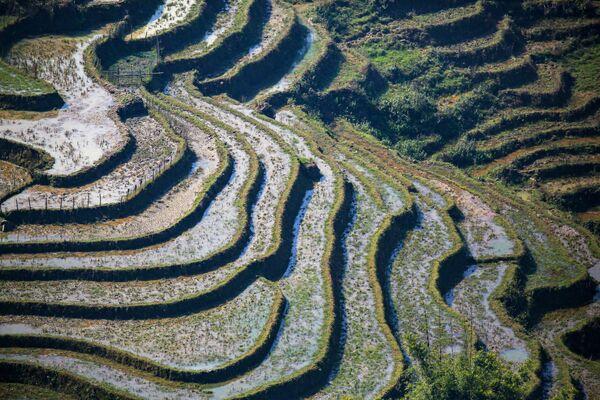 Ruộng bậc thang ở tỉnh Lào Cai, Việt Nam - Sputnik Việt Nam