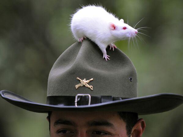 Cảnh sát chuột ở Bogota, Colombia - Sputnik Việt Nam