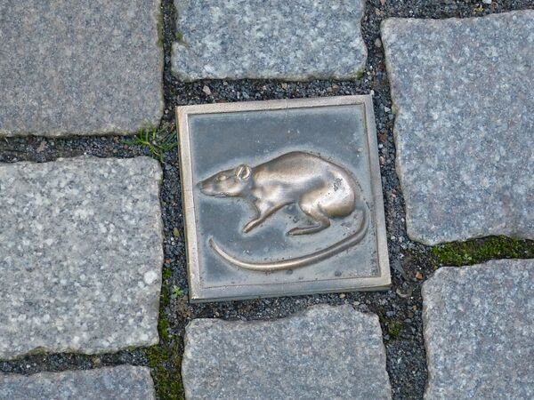 Hình ảnh con chuột trên vỉa hè vinh danh huyền thoại Người bắt chuột ở Hameln (Đức) - Sputnik Việt Nam