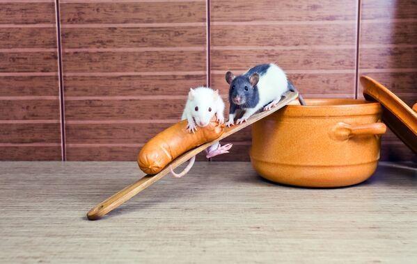 Chuột trong bếp - Sputnik Việt Nam