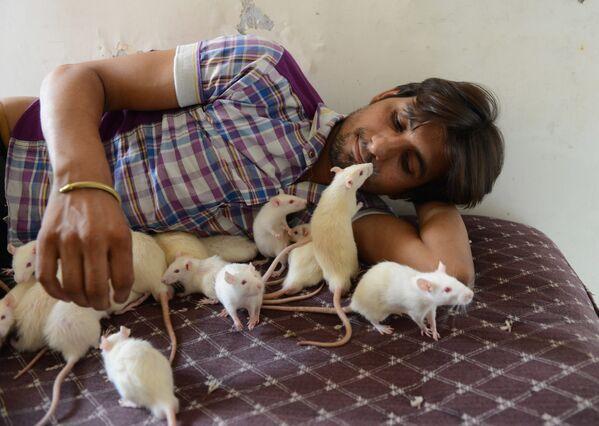 Người Ấn Độ có nghệ danh là Ratman với 50 con chuột cưng  - Sputnik Việt Nam