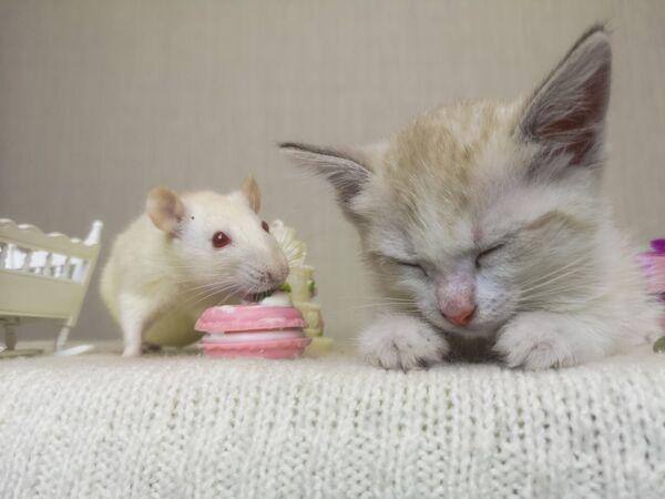 Mèo và chuột - Sputnik Việt Nam
