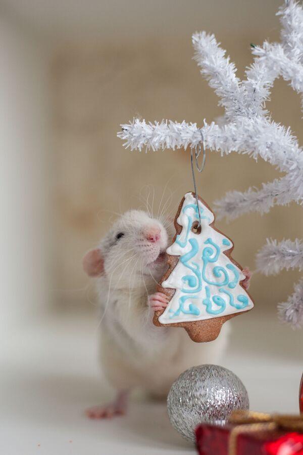 Chuột ăn bánh Giáng sinh - Sputnik Việt Nam