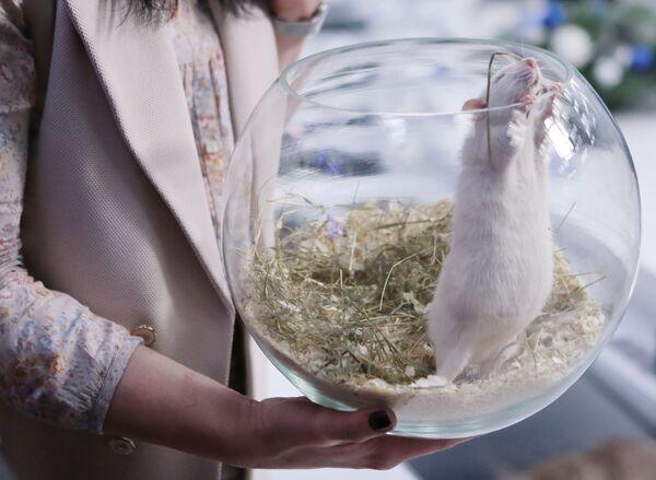 Biểu tượng năm Chuột tại cuộc họp báo ở Moskva về chủ đề chuẩn bị đón Năm mới 2020 - Sputnik Việt Nam