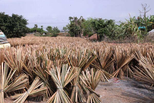 Phơi bó thanh tre trên cánh đồng - Sputnik Việt Nam