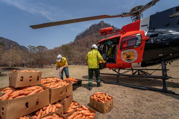Chuẩn bị thức ăn cho động vật hoang dã trên địa bàn bị ảnh hưởng vì đám cháy, Australia  - Sputnik Việt Nam