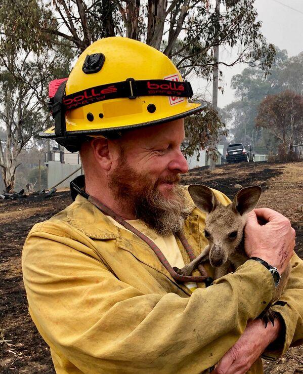 Chuột túi kangaroo bé bỏng được cứu thoát từ đám cháy rừng ở Australia  - Sputnik Việt Nam