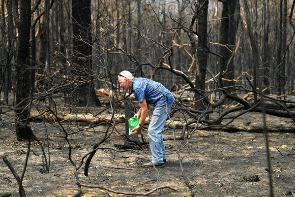 Nhà sinh thái học mang thức ăn cho những con vật ở gần ngôi nhà bị lửa thiêu ở Australia  - Sputnik Việt Nam