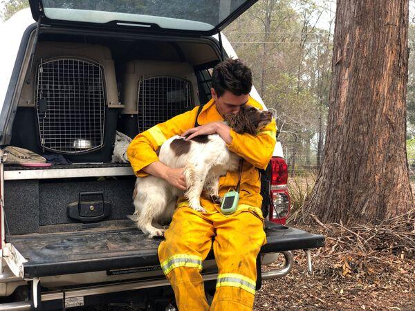 Huấn luyện viên Ryan Tate với chó Taylor trung thành giúp tìm kiếm những con gấu trúc koala bị ảnh hưởng bởi cháy rừng ở Australia  - Sputnik Việt Nam
