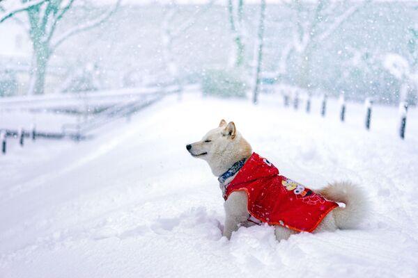 Chó mừng đón trời tuyết - Sputnik Việt Nam