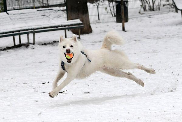 Chó chơi với quả bóng, Milan - Sputnik Việt Nam
