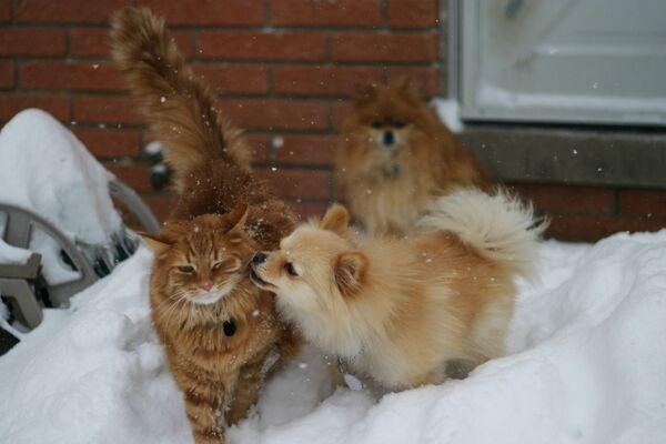 Mèo và chó chơi đùa trong tuyết - Sputnik Việt Nam