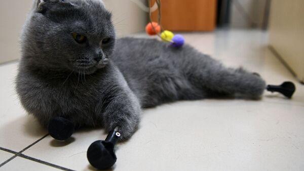 Mèo Dymka - Sputnik Việt Nam